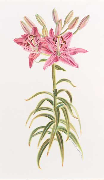 Star Gazer Lily-II giclee fine art reproduction